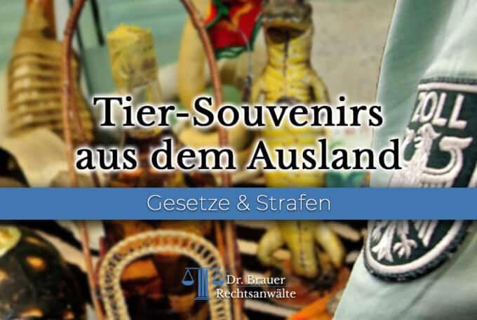 Pelz im Ausland gekauft – Darf ich Tier-Souvenirs nach Deutschland einführen?